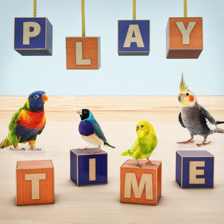 Playtime birds